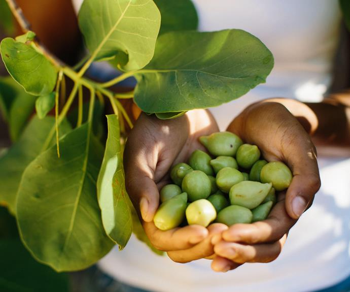 Kakadu plums contain 50 times more vitamin C than oranges.