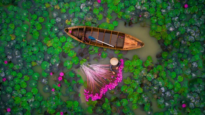 "**2ND PLACE, PEOPLE: ""WATERLILY"" IN VIETNAM BY HELIOS1412**  While Dronestagram didn't provide information from the photographer about how they captured the image, we can tell you that this is a woman harvesting water lilies in Vietnam's Mekong Delta."