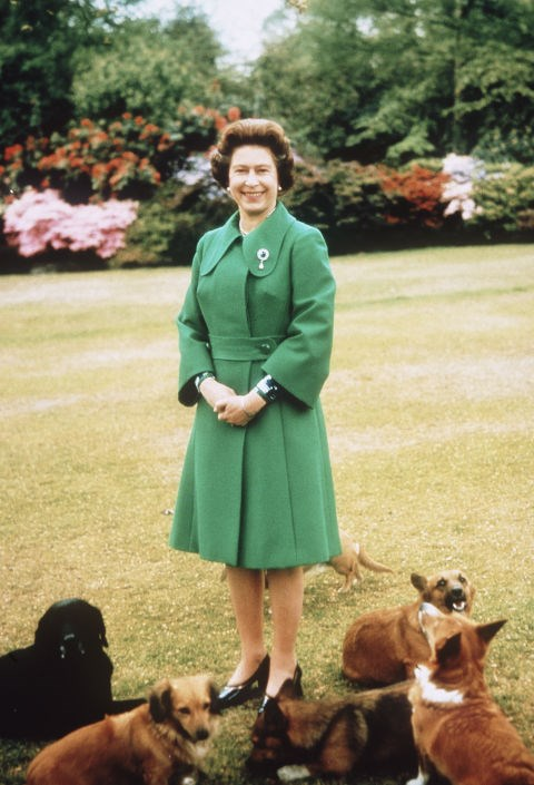 **THE QUEEN'S DOGS ARE ALWAYS PREPARED GOURMET MEALS.** <br><br> It's no secret that the Queen loves her corgis, but, unlike your pets, hers are required to eat gourmet meals, prepared daily by an in-house chef and hand-delivered by a footman.