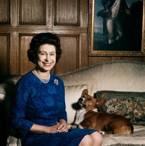 **...AND THE ROYAL CORGIS ARE NEVER REPRIMANDED.** <br><br> The Queen lets her corgis do as they please.