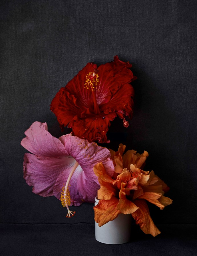 Bondi Hibiscus by Hugh Stewart, from $1,100.