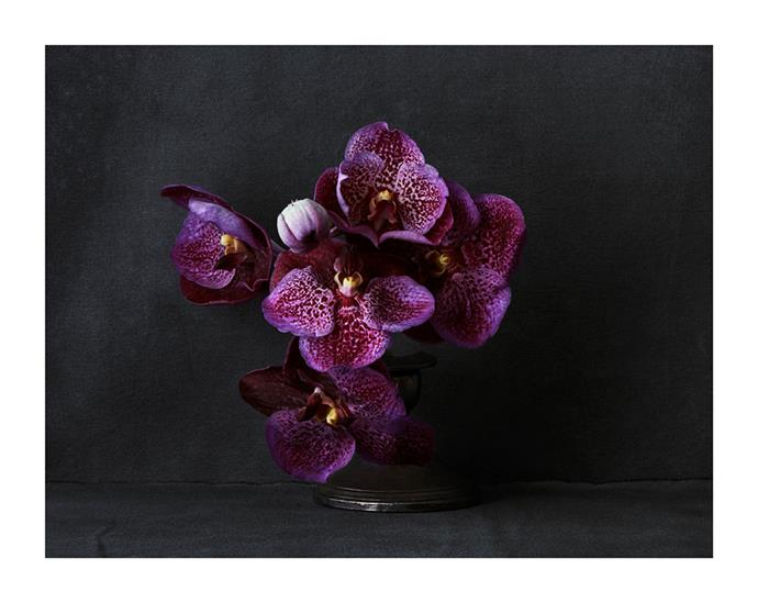 Orchid in Silver Candlestick by Hugh Stewart, from $1,100.