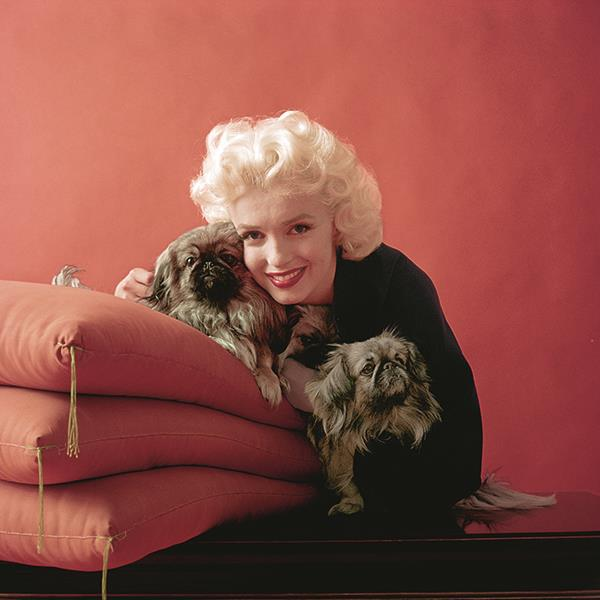 *Photographed by Milton H. Greene ©2017 Joshua Greene. Taken from the book '*The Essential Marilyn Monroe*', published by ACC Editions.*