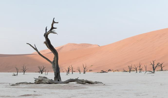 900-year-old trees in the Namibian Desert.