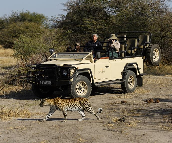 A safari in Botswana.