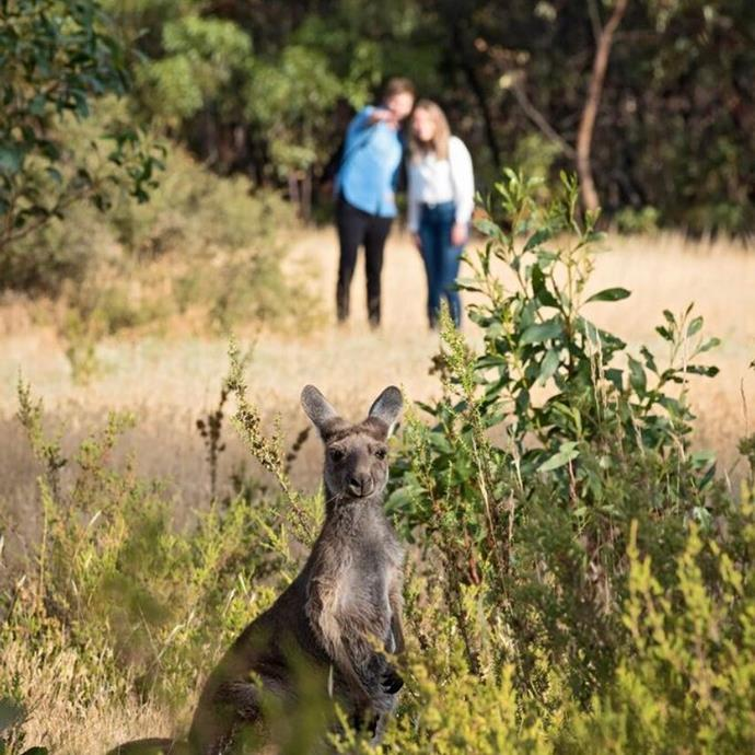 ***The Louise, Barossa Valley, South Australia***<br><br>