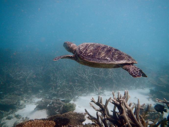***Sal Salis Ningaloo Reef, Exmouth, Western Australia***