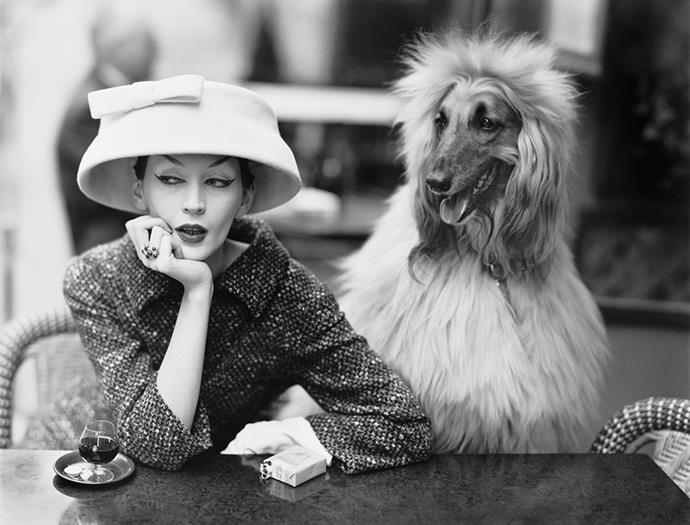 Dovima with Sacha, cloche and suit by Balenciaga, Café des Deux Magots, Paris, 1955.