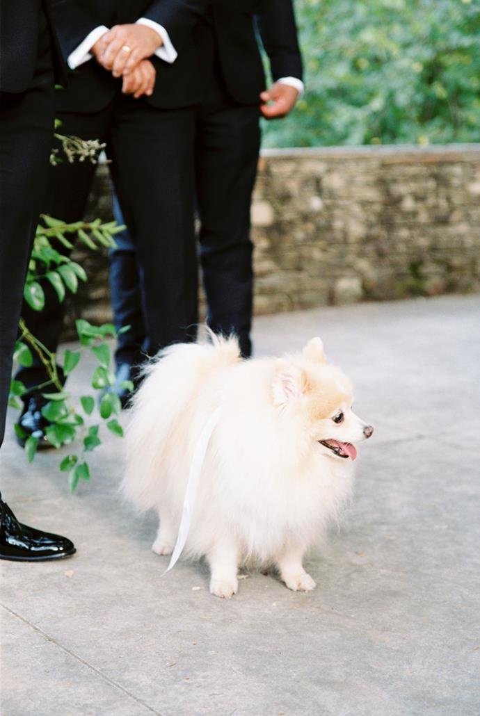**On the type of ceremony:** Our ceremony included a string trio and, of course, our two furry babe pups, centred in a redwood grove on a terrace overlooking sweeping vineyards below dripping in grapes.