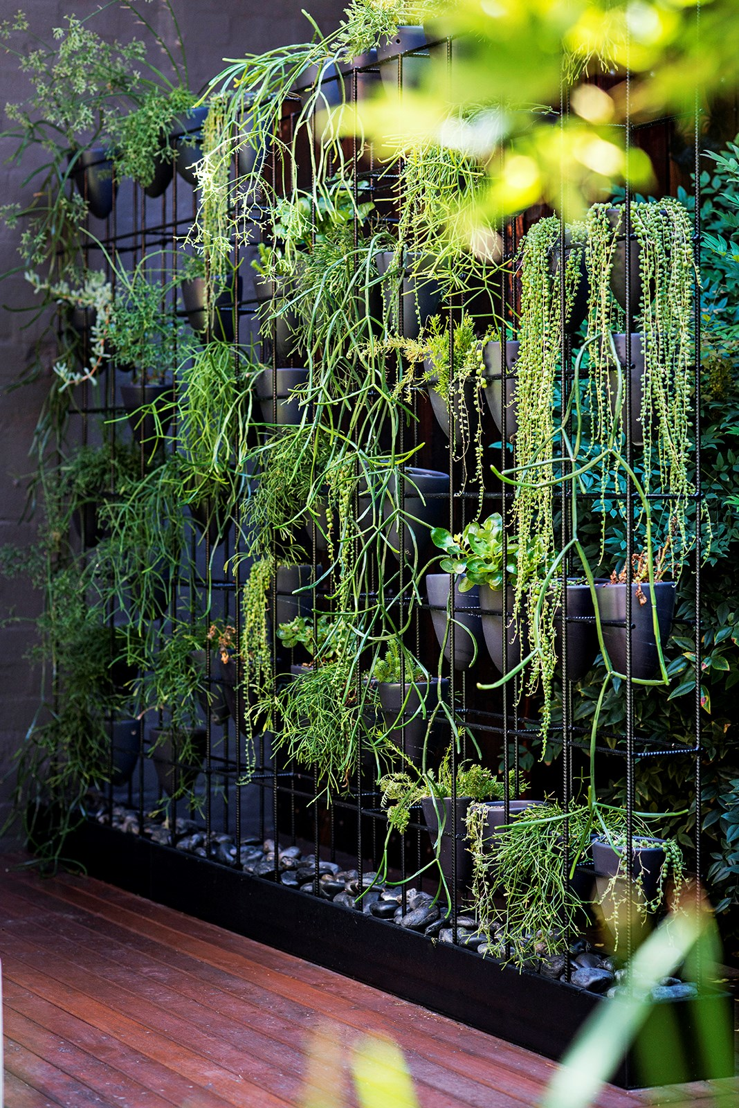 For a courtyard with very limited space, try a green wall. The wall consists of a steel box frame with hand-thrown pots perched inside. Plants include varieties of mistletoe cactus (Rhipsalis) and string of pearls (Senecio). Photo: Nicholas Watt / *Australian House & Garden*