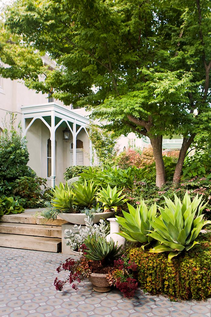 The entry garden displays layered texture, with a transplanted Japanese maple, *Agave attenuate*, assorted succulents and soft underplanting.