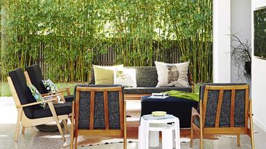 Top 5 screening plants for your garden