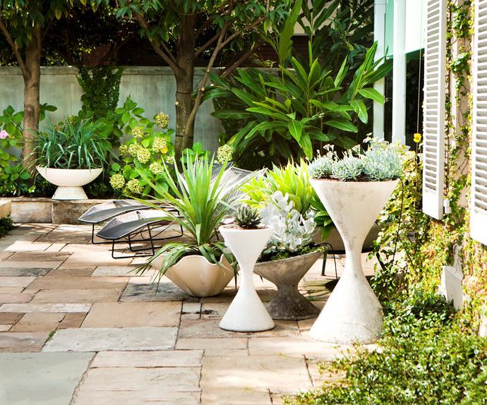 Poolside succulent garden