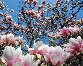 Spring flower trees bloom
