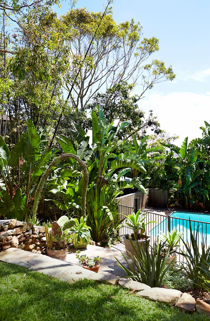 Angophoras, strelitzias, agave and bamboo all thrive in the lush, tropical-style garden. The existing pool was retained and a new spotted-gum deck built around it.