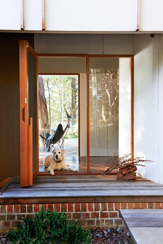 """Labrador Josh lies in wait to welcome family and friends to his [Central Coast getaway](http://www.homestolove.com.au/gallery-janes-1960s-style-beach-house-renovation-1690/