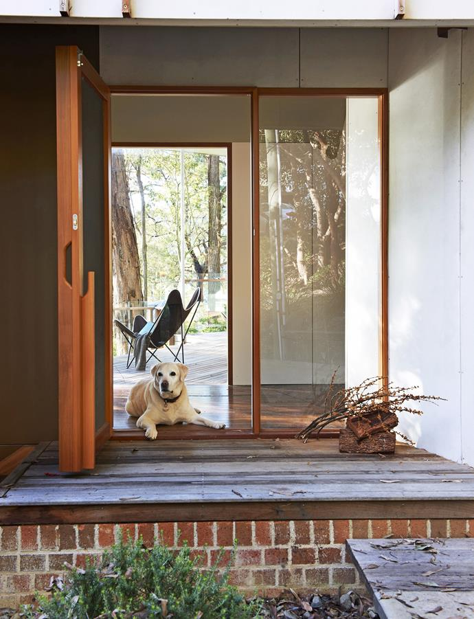 This timber and glass front door designed by architect David Boyle not only blends with its bush surrounding but creates a sense of openness. Photo: Brigid Arnott / bauersyndication.com.au