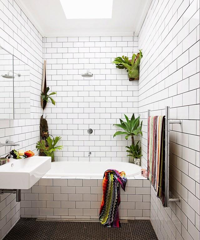 Wall mounted staghorns (Platycerium superbum) do the trick in this monochromatic bathroom. Photo: Jason Ierace / bauersyndication.com.au