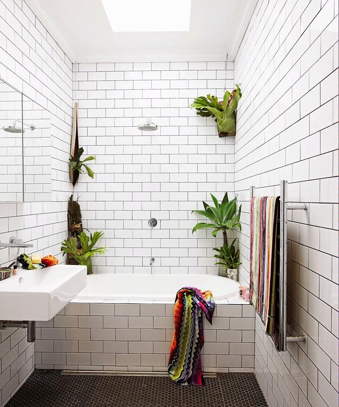 Wall mounted staghorns (*Platycerium superbum*) do the trick in this monochromatic bathroom. Photo: Jason Ierace / bauersyndication.com.au