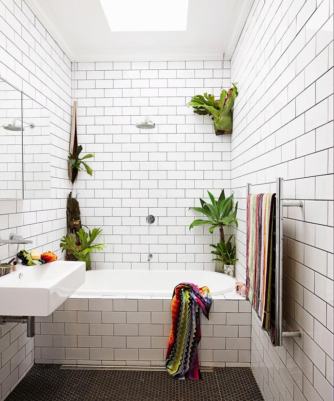 Wall mounted staghorns (*Platycerium superbum*) do the trick in this monochromatic bathroom. Photo: Jason Ierace / bauersyndication.com.au
