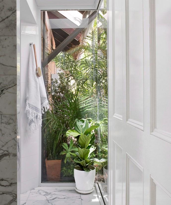A Fiddle leaf fig (*Ficus lyrata*) softens the white marble in this Perth bathroom. Photo: Angelita Bonetti / bauersyndication.com.au