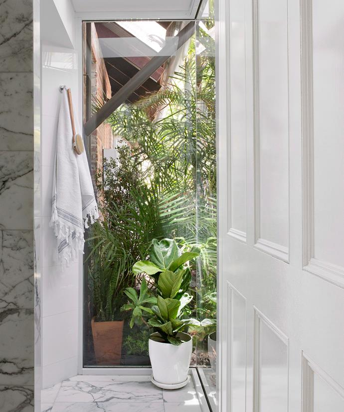 A Fiddle leaf fig (*Ficus lyrata*) softens the white marble in this Perth bathroom. Photo: Angelita Bonetti / bauersyndication.com.au