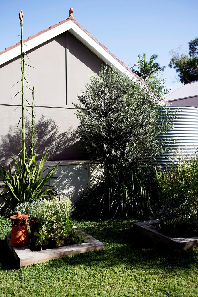 Two of the best ways to reduce the loss of water through evaporation are mulch and shade. If you can use rainwater your plants will love you for it. Photo: Nicholas Watt