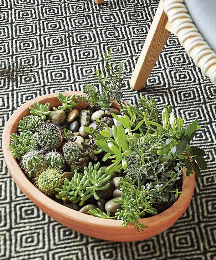 Clay or porous pots are best indoors as non-porous ones, like plastic or glazed pots, can restrict air flow while holding moisture longer. Photo: Scott Hawkins / bauersyndication.com.au