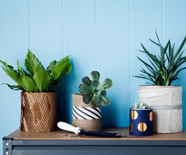 Thrive! How to keep your indoor plants alive