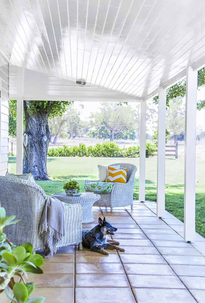 """Rusty happily surveys his domain from the tiled verandah of this [family homestead](http://www.homestolove.com.au/gallery-charles-and-angelas-country-homestead-1818/