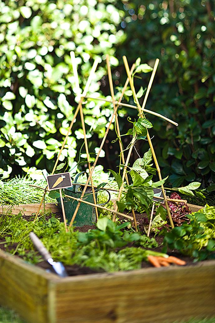 It's important to provide plants with a trellis early in the growing process.