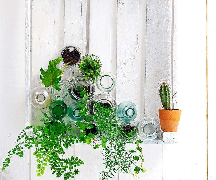 **Renter tip:** Instead of hanging a crate on a wall, display it flat on a table and pack it with bottles and jars filled with plants.   **FROM TOP** Philodendron, succulent, ivy, asparagus fern, maidenhair fern and ivy.