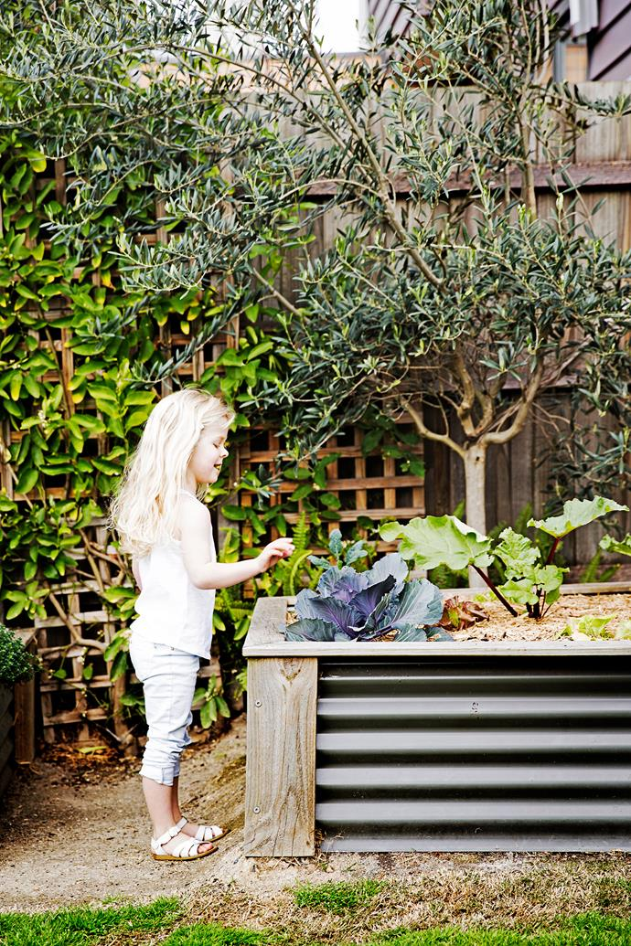 Planter boxes are home to vegetables and herbs.