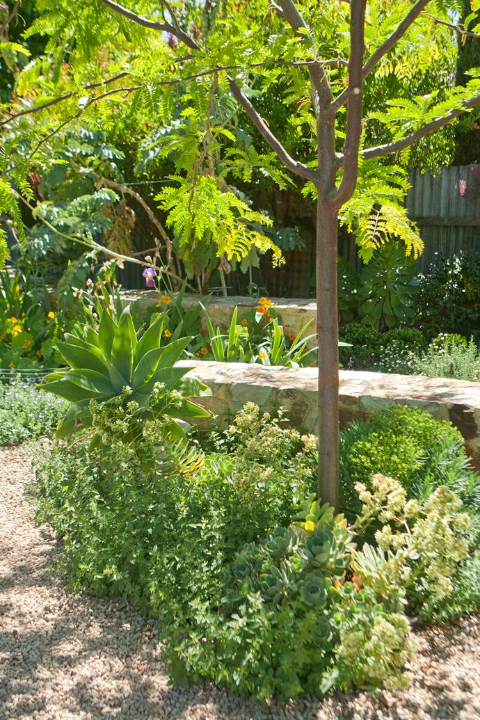 Instead of lawn, gravel pathways meander through the well-planned waterwise garden.