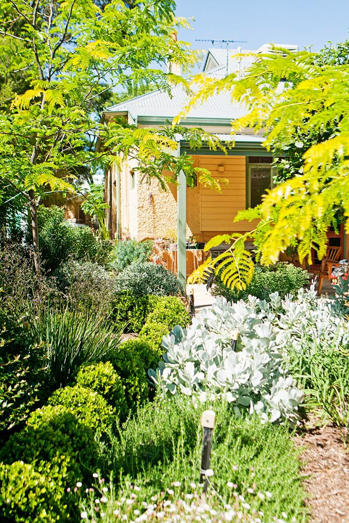 Like Anna, you can create contrast in your garden by blending clipped forms with wild plantings.