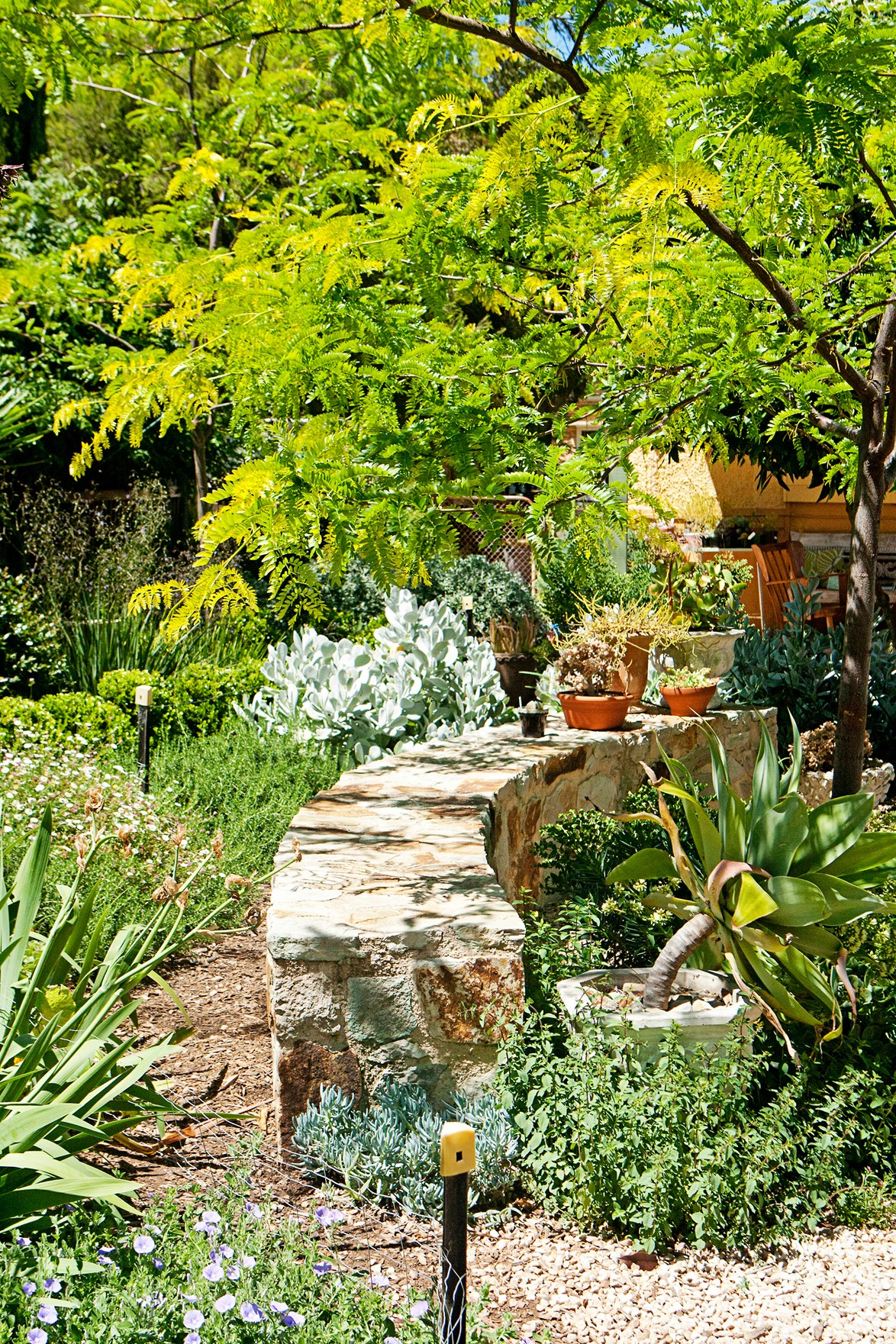 "See how this [sustainable Adelaide Hills garden](https://www.homestolove.com.au/gallery-annas-drought-tolerant-garden-paradise-1864|target=""_blank"") has been drought-proofed to save on water during dry summers."