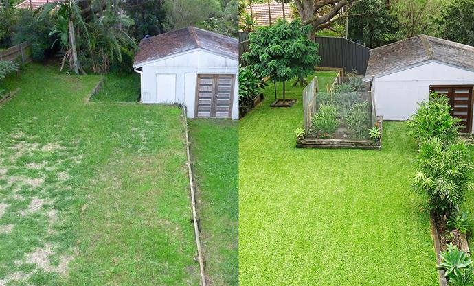 **BEFORE AND AFTER:** The neglected backyard was transformed with Sir Walter Buffalo lawn and new garden beds filled with tropical plants.