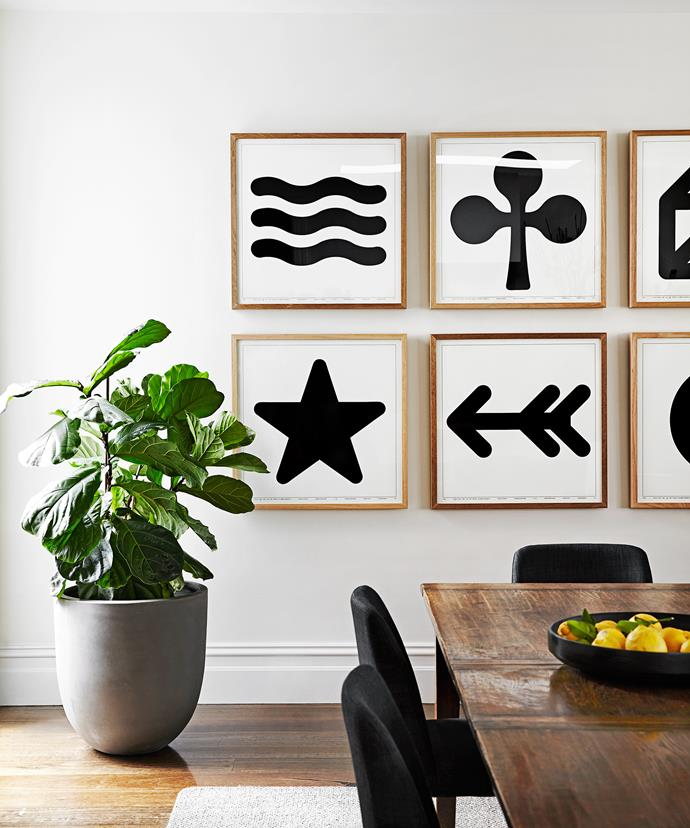 "A green fiddle leaf fig offsets the graphic black-and-white artworks in the dining space.   Poster **artworks** by Enzo Mari from [Luke Furniture](http://www.luke.com.au/?utm_campaign=supplier/|target=""_blank"")."