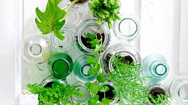 Easy being green: Cool indoor plant ideas