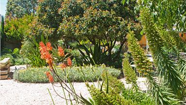 Anna's drought tolerant garden paradise