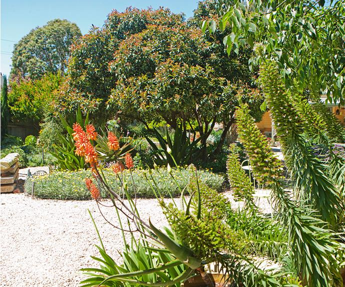 Adelaide Hills sustainable garden