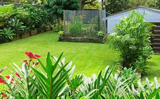 Back lawn and tropical plants