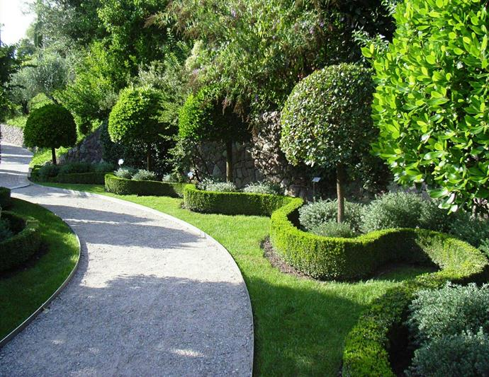 English box (*Buxus sempervirens*) is a slow-growing shrub with dense foliage, perfect for shaping into classic hedges and topiaries. Photo: Getty Images