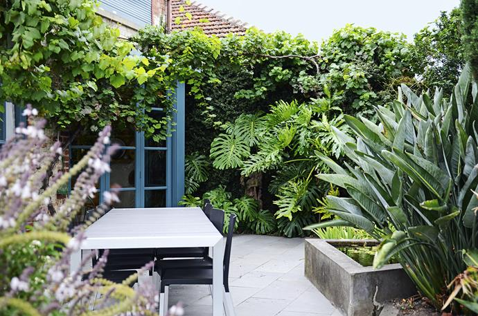 The existing garden, at the rear of the home, provided Myles with key cues for inclusions in the new garden. The old lily pond inspired him in two ways: not only did he add new ponds, he repeated the shape, creating raised square vegetable beds in the new garden. Myles also split up clumps of bird of paradise (*Strelitzia reginae*) and spread them throughout the new plot.