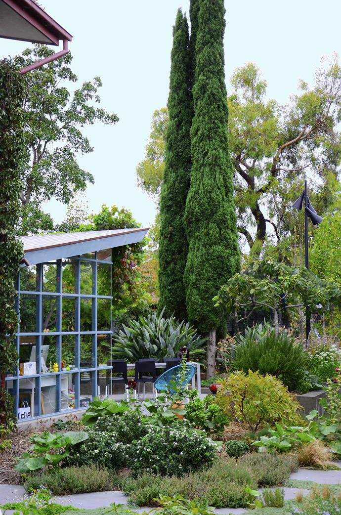 """The home's rear open-plan living space has floor-to-ceiling windows to enhance the views of the enveloping garden. Mature Pencil pines (*Cupressus Sempervirens* 'Stricta') echo the height of the double-storey terrace. """"They're like little sentinels popping up in the garden,"""" says Myles."""