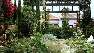 Urban sanctuary: A rambling inner-city garden