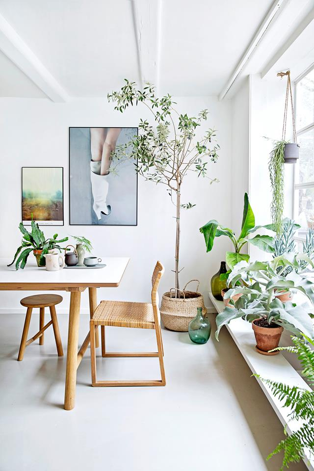5 motivos para decorar com plantas pontos de cor
