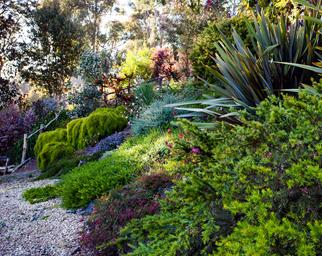 Native filled Australian garden