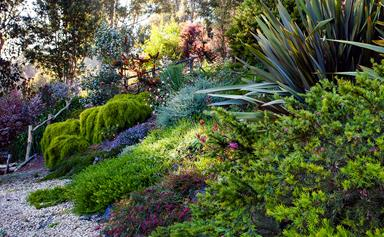 Jessie's magnificent native Australian garden