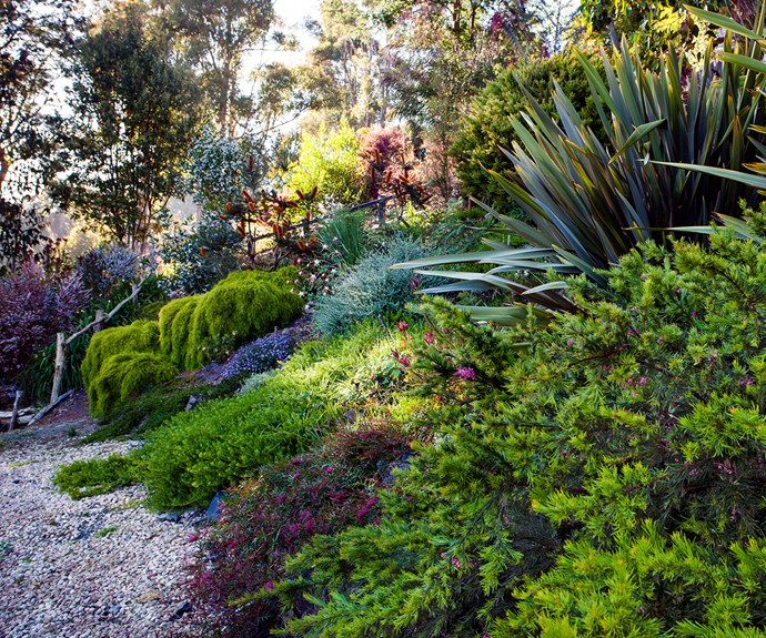 Native filled Australian garden
